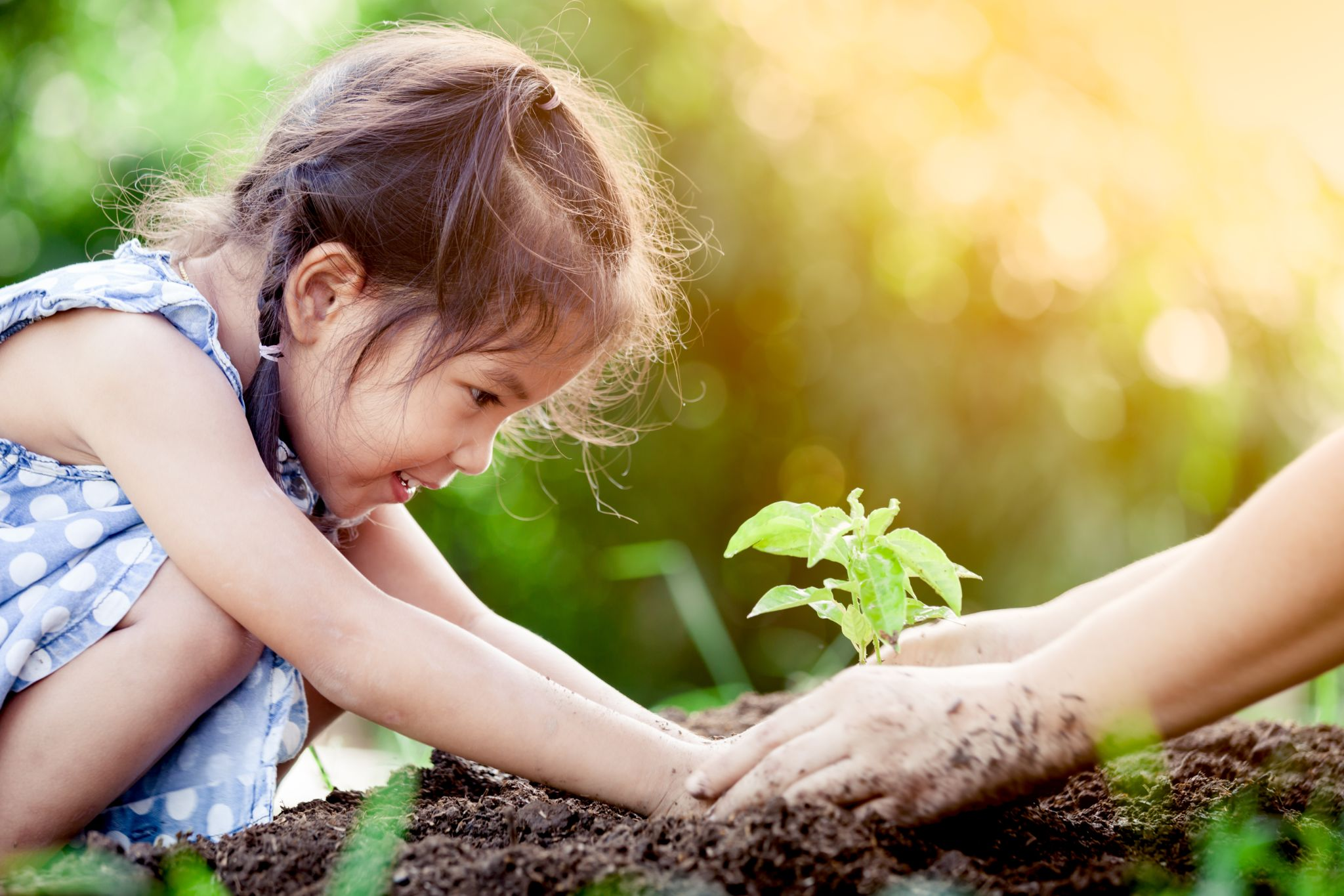 little girl and parent planting young tree